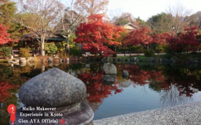 舞妓体験 ぎをん彩2018年11月28日朝の京都、祇園、東山、八坂神社周辺、円山公園の紅葉の進み具合はどんなでしょうか?教えてぇー!○○さーん!!