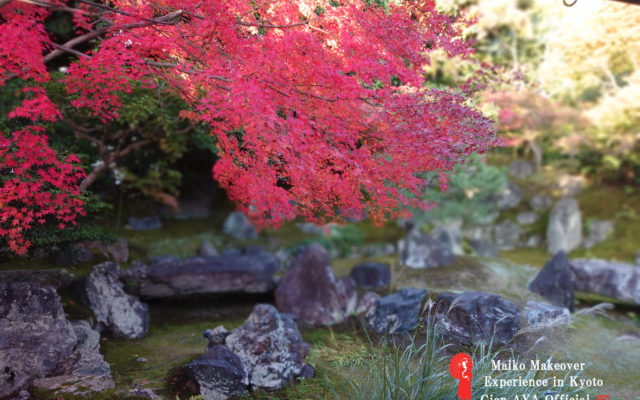 "Now is the ""Autumn season in Kyoto!! I will post a picture of the autumn leaves."