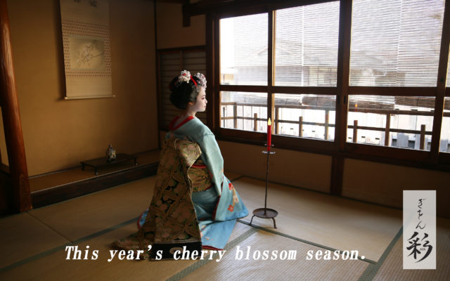 Cherry blossom season 2021 Spring.