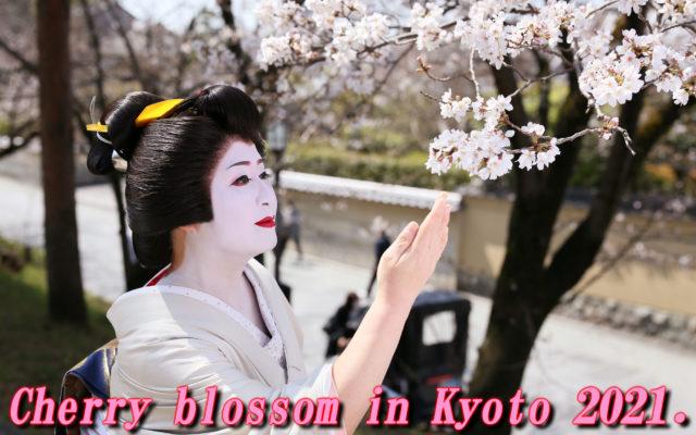 Cherry blossom in Kyoto!!! yeah~~~~!!!