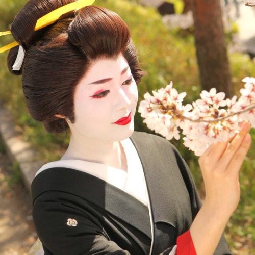 京都芸妓体験芸妓プラン